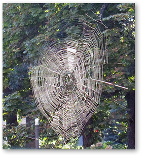 This amazing spiderweb was found and photographed by Sr. Margaret Egan while walking on the grounds of Mount Saint Vincent.