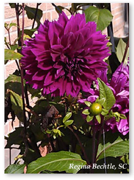mary-beginning-flower