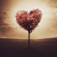God is the tree of love.